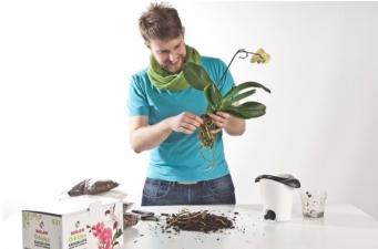 Apie tai, kaip tinkamai prižiūrėti orchidėjas