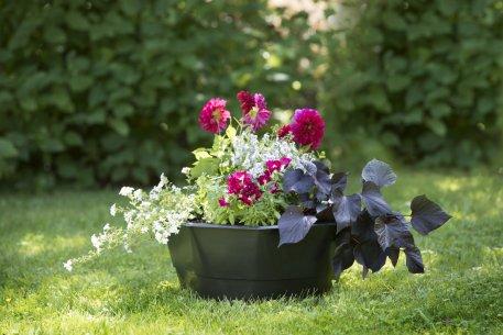 Biolan Augalų sodinimo pagrindas
