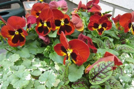 Biolan Vasarinių gėlių žemė