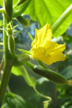 Biolan Maišas su trąšomis auginimui