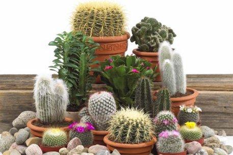 Biolan Kaktusų žemė