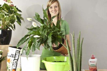 Biolan Maistinis skystis augalams